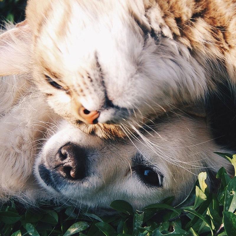 Futtermittel für Haustiere